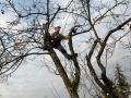 pielęgnacja drzew w sadzie owocowym
