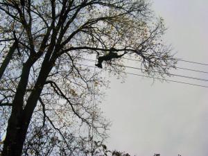 Prace wysokościowe: pielęgnacja drzew