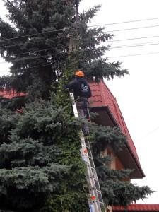 Przycinka drzew przy liniach energetycznych