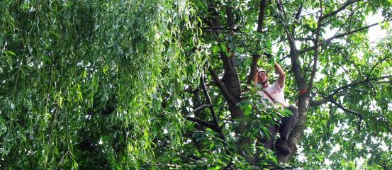 Arborystyka- prace na drzewach