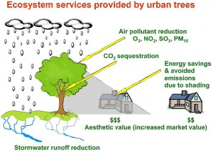 Urban-Forest-Benefits-Diagram